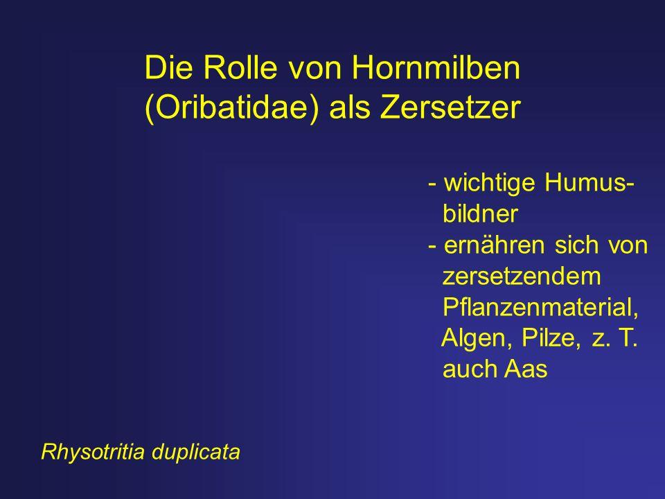 Die Rolle von Hornmilben (Oribatidae) als Zersetzer - wichtige Humus- bildner - ernähren sich von zersetzendem Pflanzenmaterial, Algen, Pilze, z. T. a