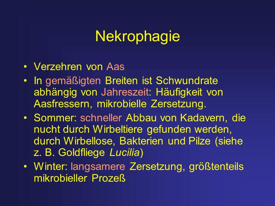 Nekrophagie Verzehren von Aas In gemäßigten Breiten ist Schwundrate abhängig von Jahreszeit: Häufigkeit von Aasfressern, mikrobielle Zersetzung. Somme