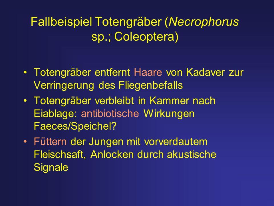 Fallbeispiel Totengräber (Necrophorus sp.; Coleoptera) Totengräber entfernt Haare von Kadaver zur Verringerung des Fliegenbefalls Totengräber verbleib