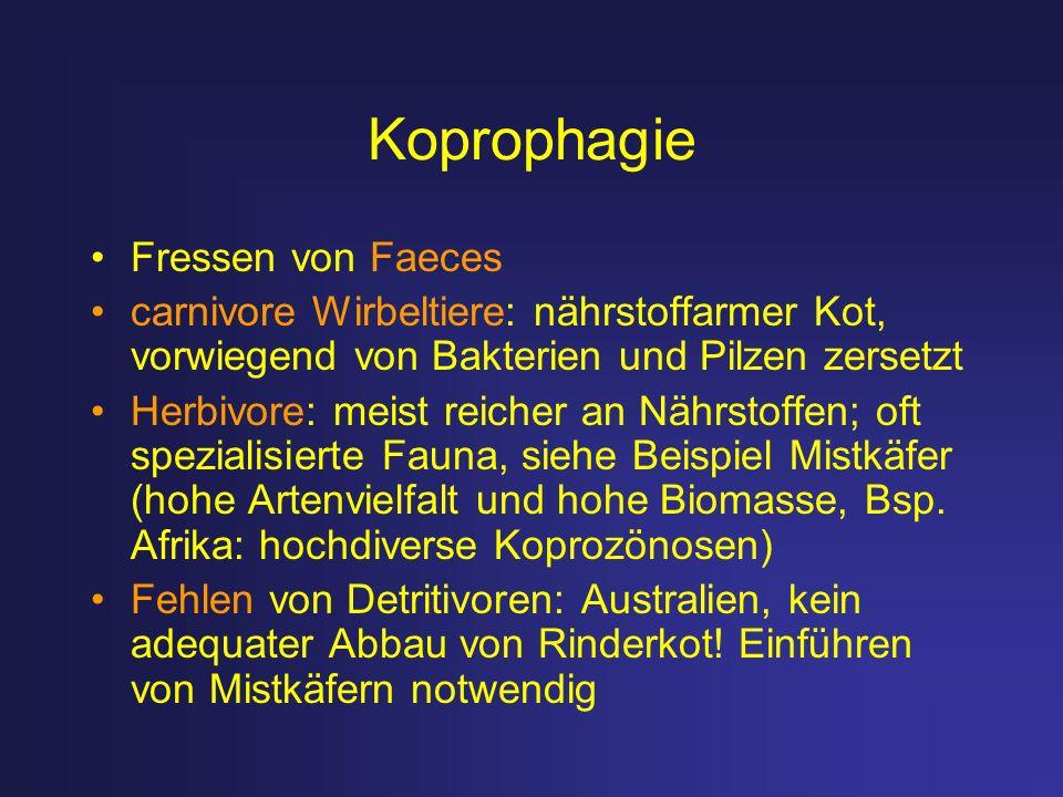 Koprophagie Fressen von Faeces carnivore Wirbeltiere: nährstoffarmer Kot, vorwiegend von Bakterien und Pilzen zersetzt Herbivore: meist reicher an Näh