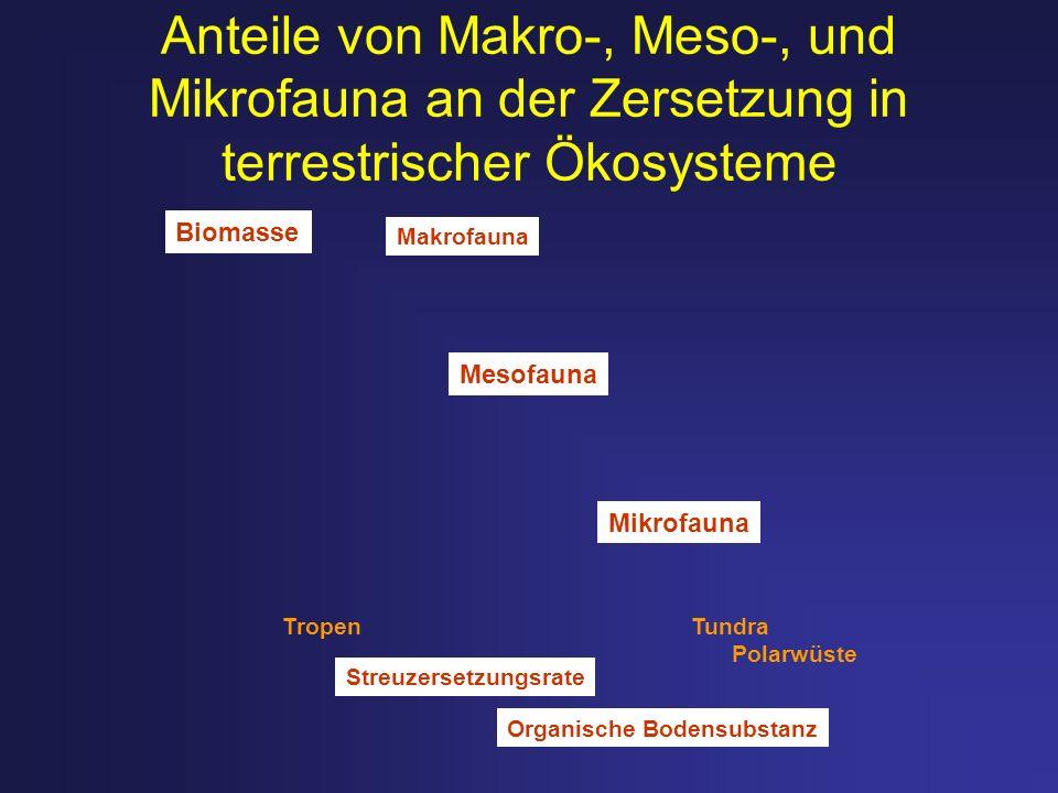 Anteile von Makro-, Meso-, und Mikrofauna an der Zersetzung in terrestrischer Ökosysteme Makrofauna Mesofauna Mikrofauna Tropen Tundra Polarwüste Stre