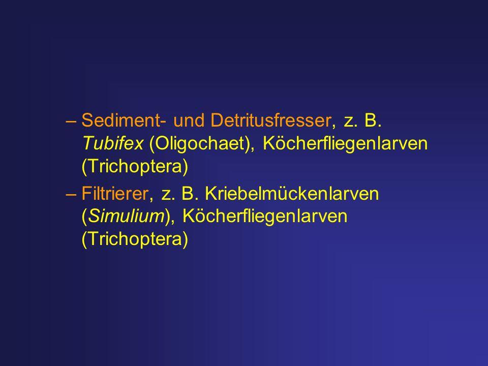 –Sediment- und Detritusfresser, z. B. Tubifex (Oligochaet), Köcherfliegenlarven (Trichoptera) –Filtrierer, z. B. Kriebelmückenlarven (Simulium), Köche
