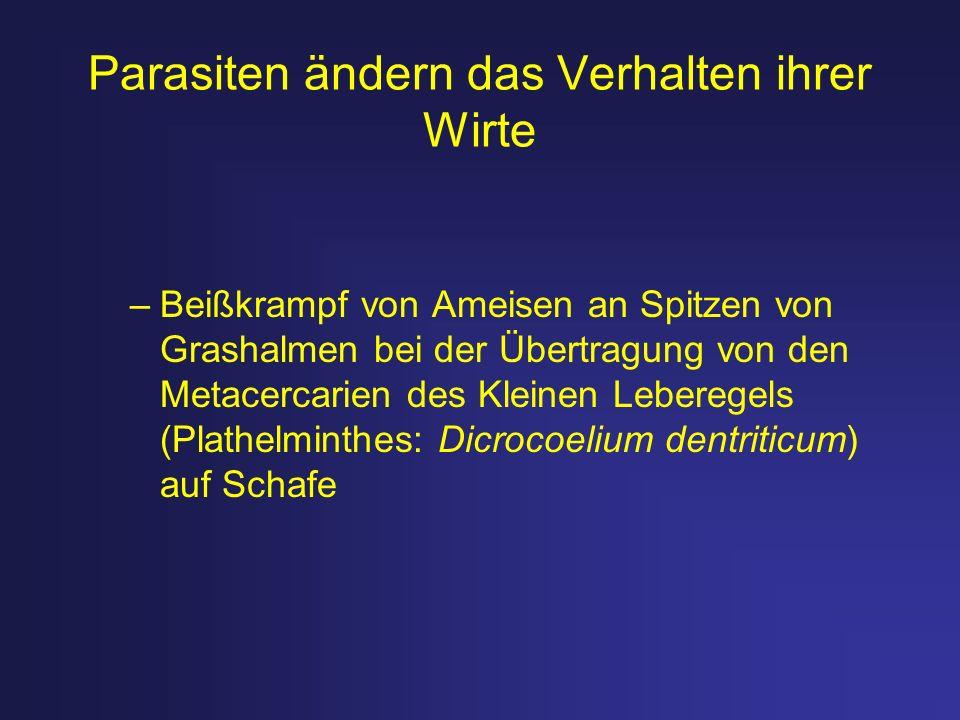 –Sediment- und Detritusfresser, z.B.