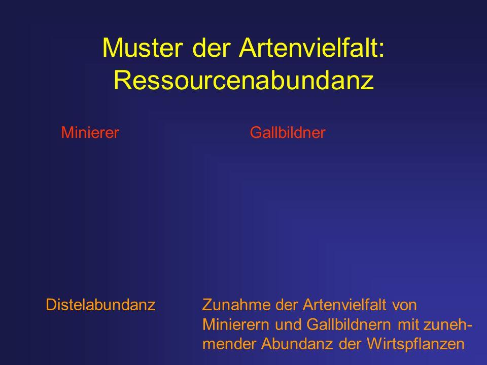 Muster der Artenvielfalt: Ressourcenabundanz Minierer Gallbildner Distelabundanz Zunahme der Artenvielfalt von Minierern und Gallbildnern mit zuneh- m
