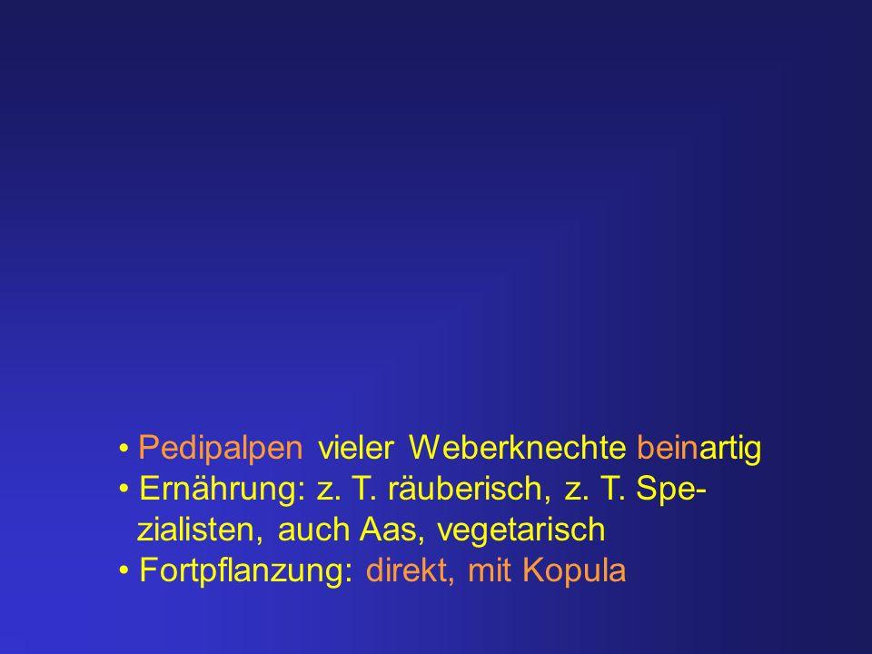 Pedipalpen vieler Weberknechte beinartig Ernährung: z. T. räuberisch, z. T. Spe- zialisten, auch Aas, vegetarisch Fortpflanzung: direkt, mit Kopula