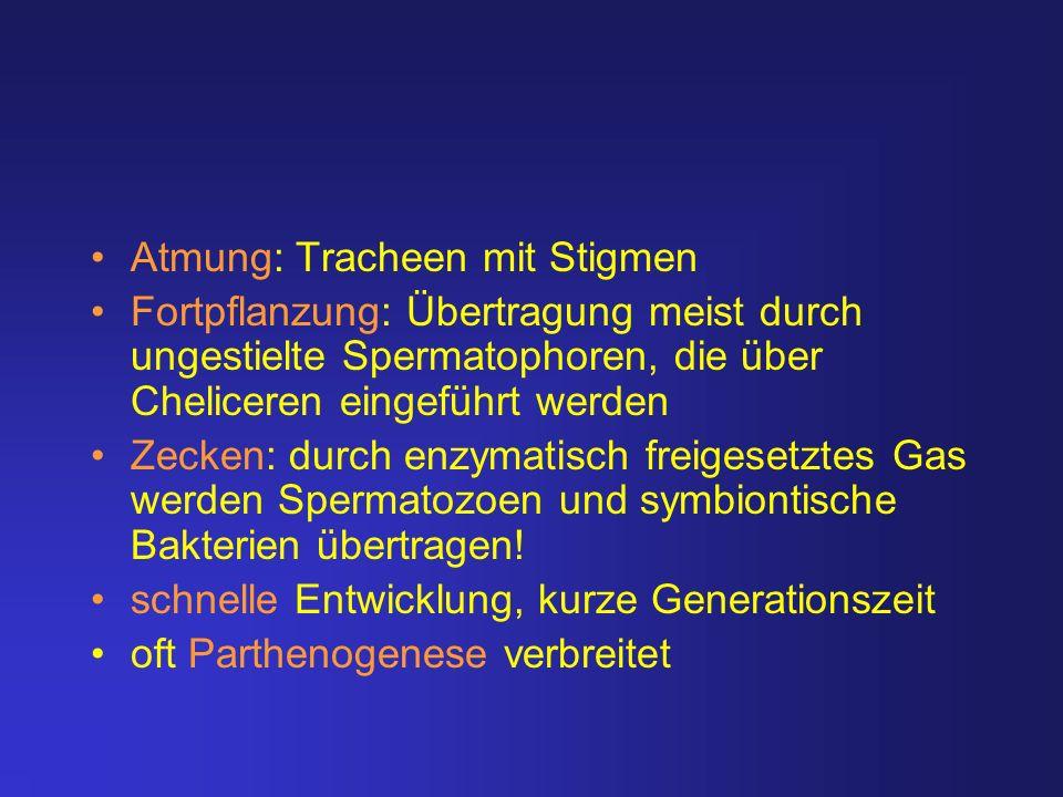 Atmung: Tracheen mit Stigmen Fortpflanzung: Übertragung meist durch ungestielte Spermatophoren, die über Cheliceren eingeführt werden Zecken: durch en