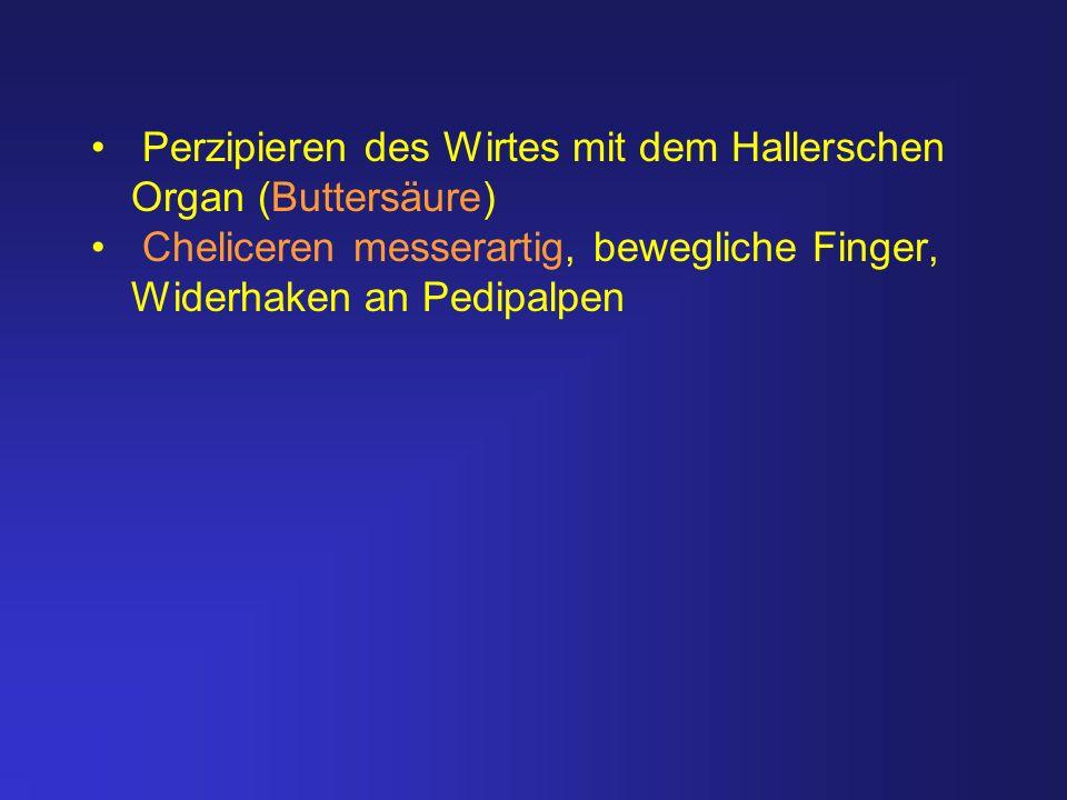 Perzipieren des Wirtes mit dem Hallerschen Organ (Buttersäure) Cheliceren messerartig, bewegliche Finger, Widerhaken an Pedipalpen