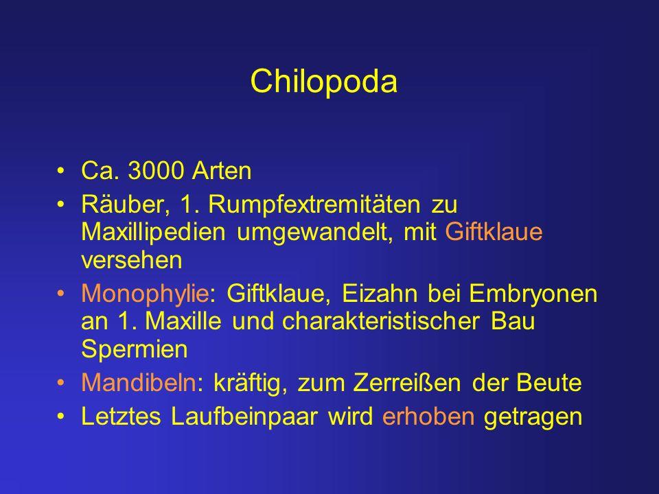 Chilopoda Ca. 3000 Arten Räuber, 1. Rumpfextremitäten zu Maxillipedien umgewandelt, mit Giftklaue versehen Monophylie: Giftklaue, Eizahn bei Embryonen