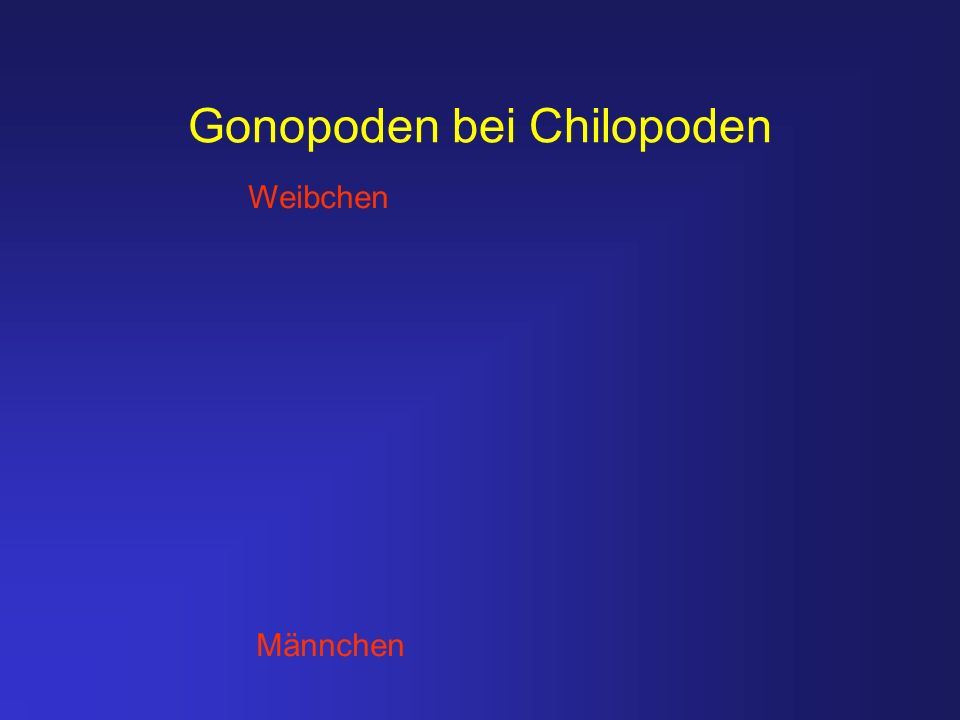 Gonopoden bei Chilopoden Weibchen Männchen
