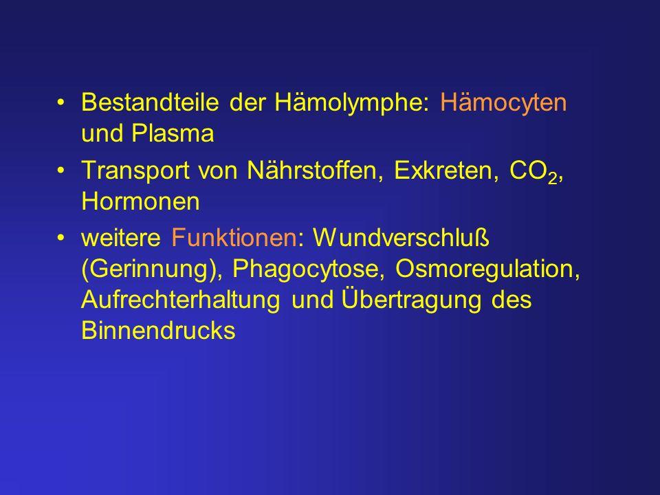Bestandteile der Hämolymphe: Hämocyten und Plasma Transport von Nährstoffen, Exkreten, CO 2, Hormonen weitere Funktionen: Wundverschluß (Gerinnung), P