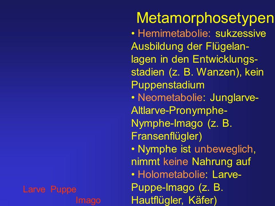 Metamorphosetypen Larve Puppe Imago Hemimetabolie: sukzessive Ausbildung der Flügelan- lagen in den Entwicklungs- stadien (z. B. Wanzen), kein Puppens