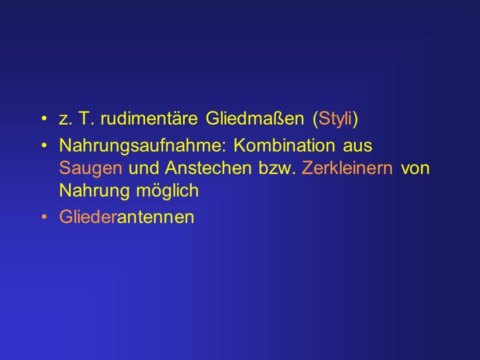 z. T. rudimentäre Gliedmaßen (Styli) Nahrungsaufnahme: Kombination aus Saugen und Anstechen bzw. Zerkleinern von Nahrung möglich Gliederantennen