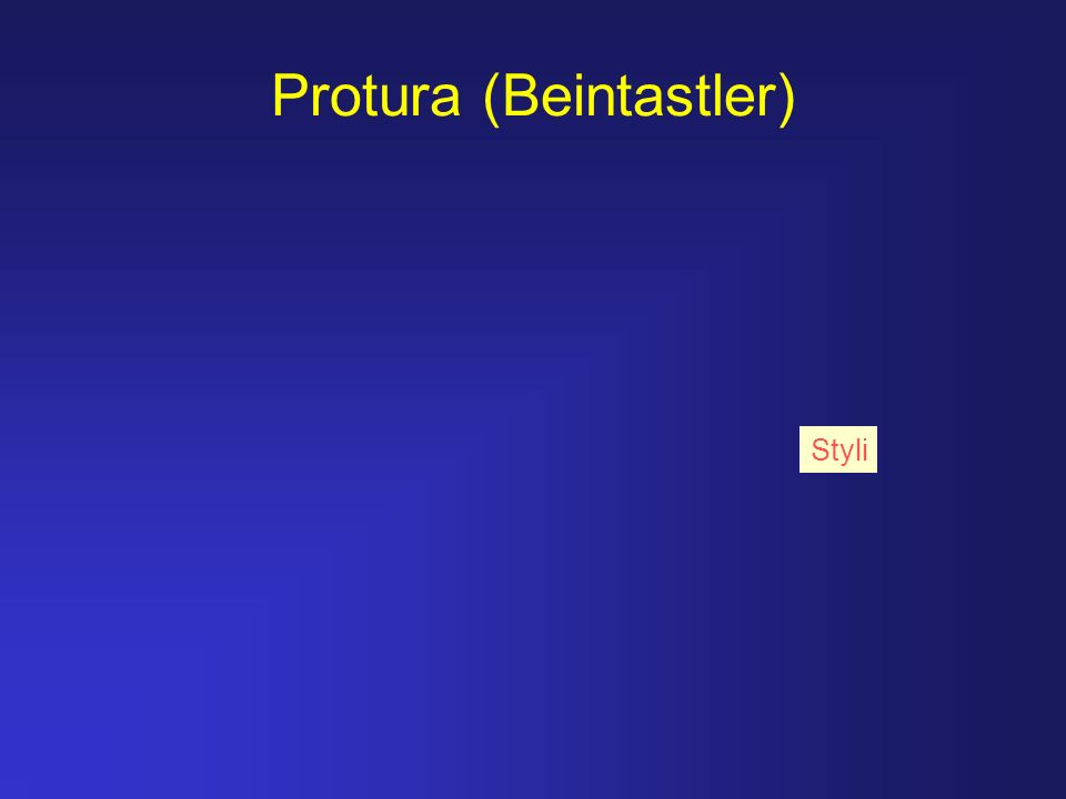 Protura (Beintastler) Styli