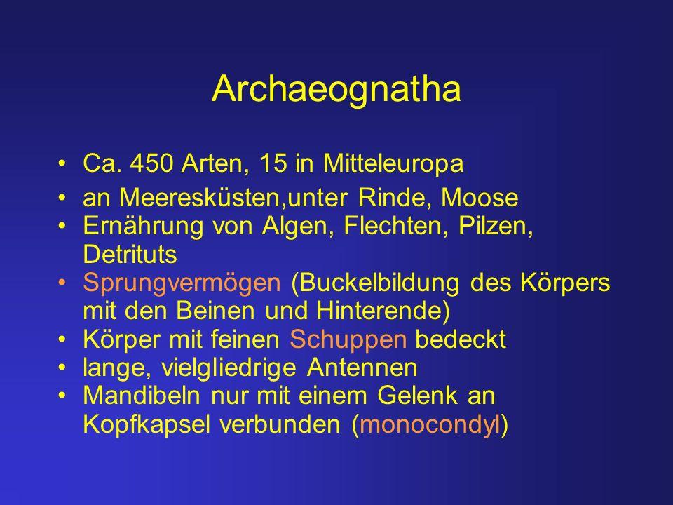 Archaeognatha Ca. 450 Arten, 15 in Mitteleuropa an Meeresküsten,unter Rinde, Moose Ernährung von Algen, Flechten, Pilzen, Detrituts Sprungvermögen (Bu
