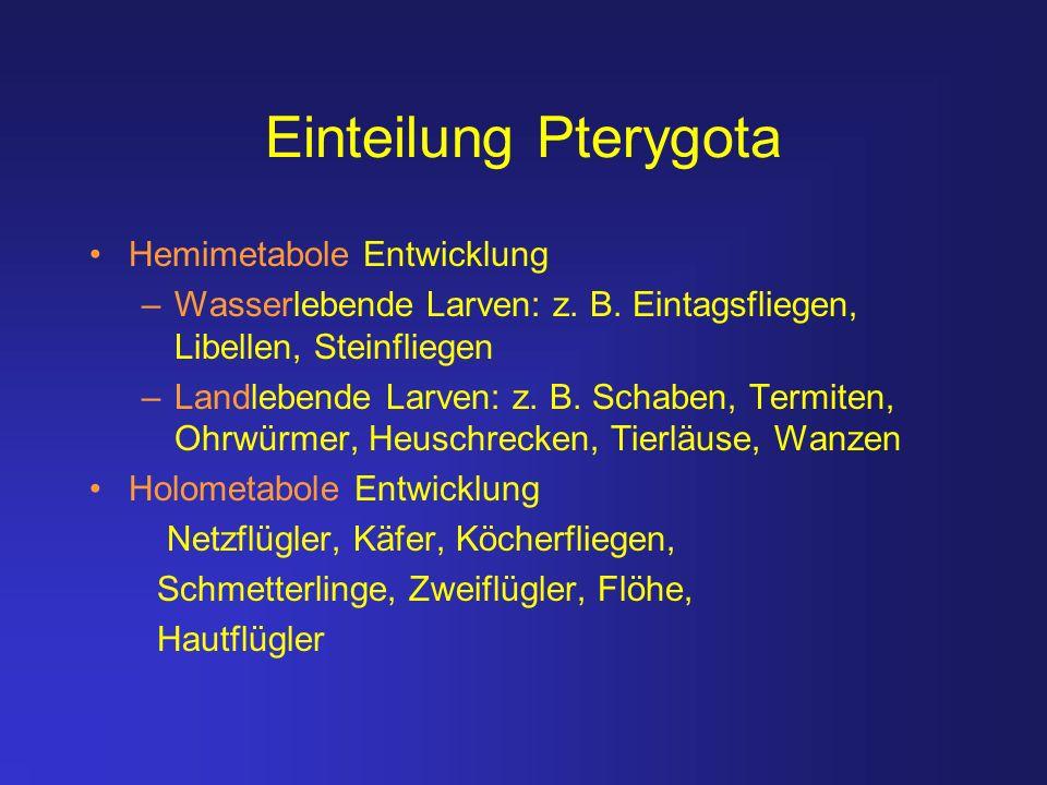 Einteilung Pterygota Hemimetabole Entwicklung –Wasserlebende Larven: z. B. Eintagsfliegen, Libellen, Steinfliegen –Landlebende Larven: z. B. Schaben,