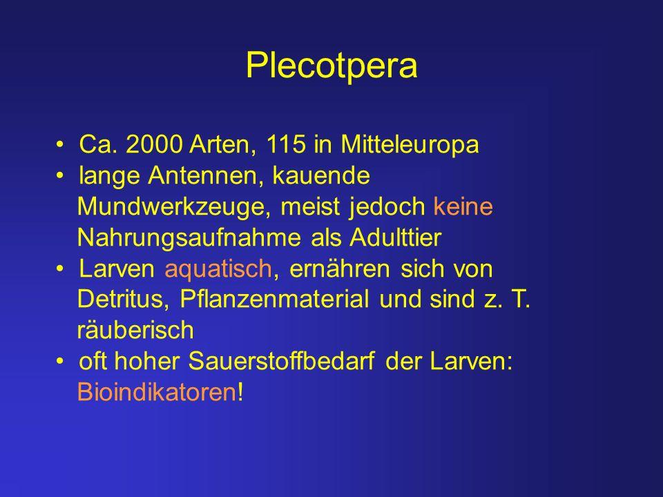 Plecotpera Ca. 2000 Arten, 115 in Mitteleuropa lange Antennen, kauende Mundwerkzeuge, meist jedoch keine Nahrungsaufnahme als Adulttier Larven aquatis