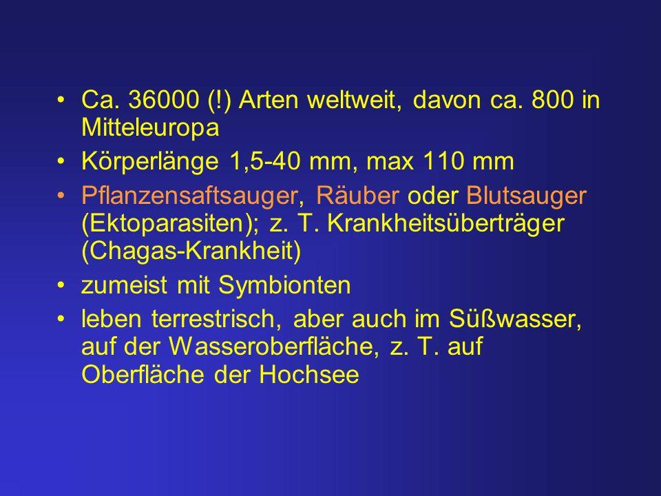 Ca. 36000 (!) Arten weltweit, davon ca. 800 in Mitteleuropa Körperlänge 1,5-40 mm, max 110 mm Pflanzensaftsauger, Räuber oder Blutsauger (Ektoparasite