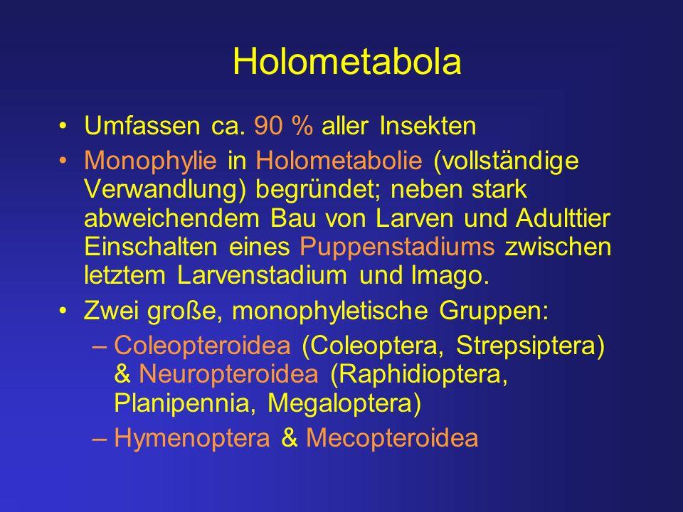 Holometabola Umfassen ca. 90 % aller Insekten Monophylie in Holometabolie (vollständige Verwandlung) begründet; neben stark abweichendem Bau von Larve