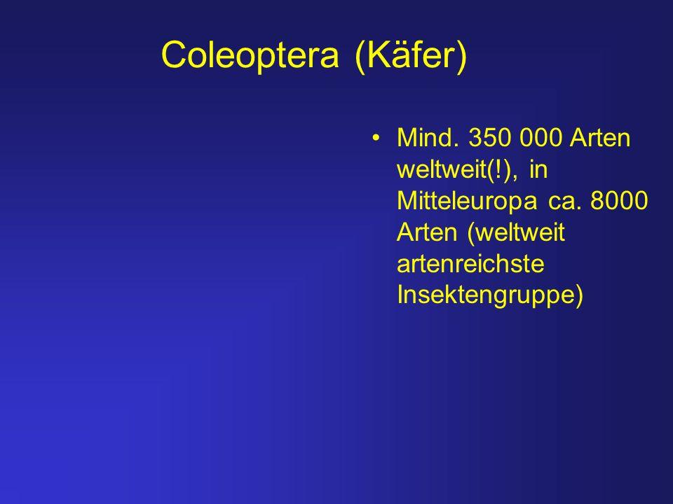 Coleoptera (Käfer) Mind. 350 000 Arten weltweit(!), in Mitteleuropa ca. 8000 Arten (weltweit artenreichste Insektengruppe)