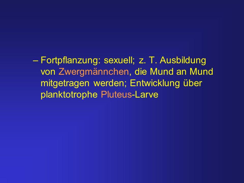 –Fortpflanzung: sexuell; z. T. Ausbildung von Zwergmännchen, die Mund an Mund mitgetragen werden; Entwicklung über planktotrophe Pluteus-Larve