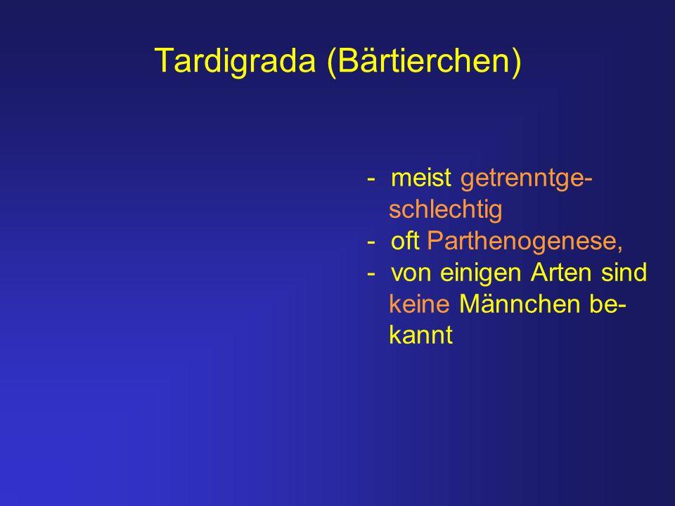 Tardigrada (Bärtierchen) - meist getrenntge- schlechtig - oft Parthenogenese, - von einigen Arten sind keine Männchen be- kannt
