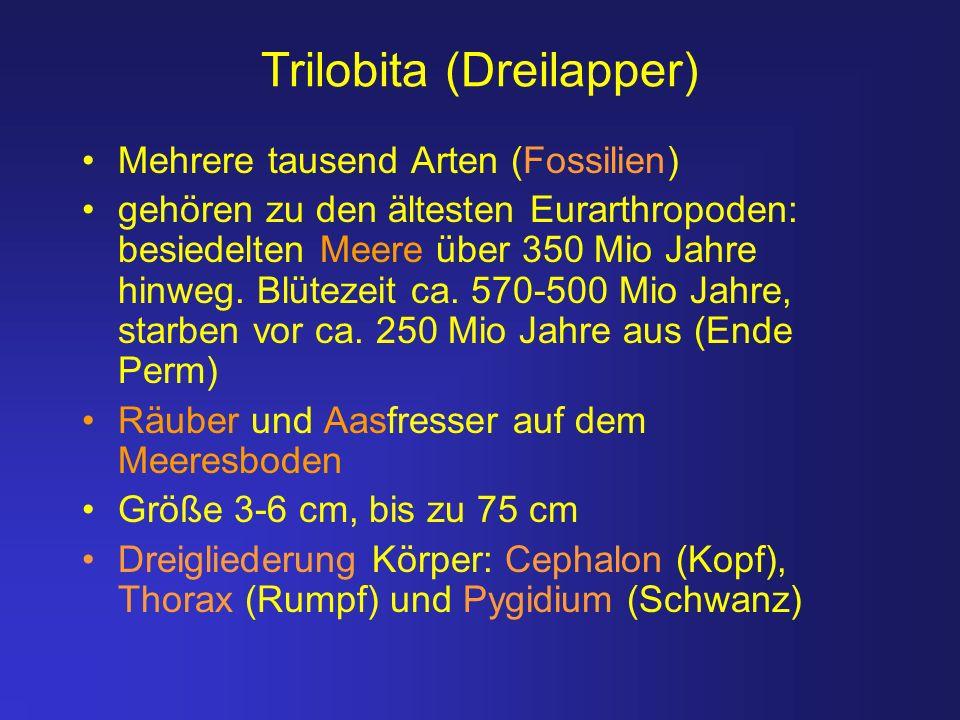 Trilobita (Dreilapper) Mehrere tausend Arten (Fossilien) gehören zu den ältesten Eurarthropoden: besiedelten Meere über 350 Mio Jahre hinweg. Blütezei
