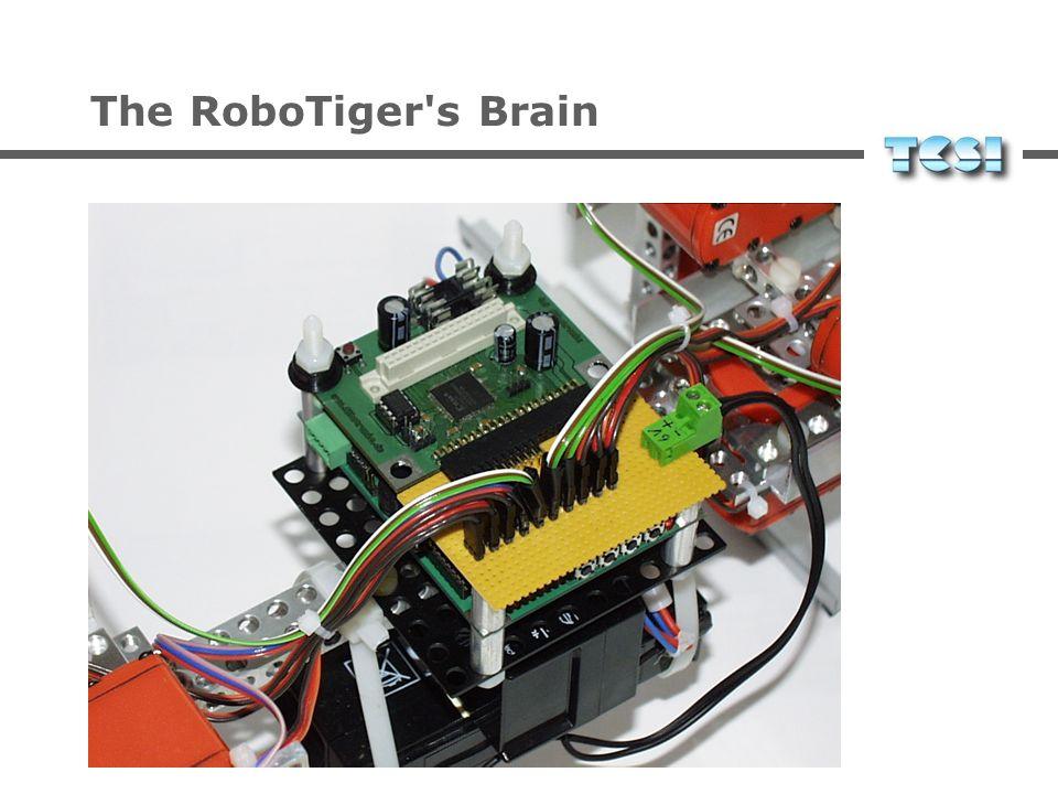 The RoboTiger's Brain