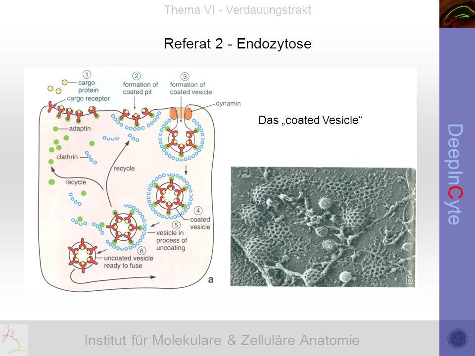 Institut für Molekulare & Zelluläre Anatomie DeepInCyte Thema VI - Verdauungstrakt Referat 2 - Endozytose Das coated Vesicle