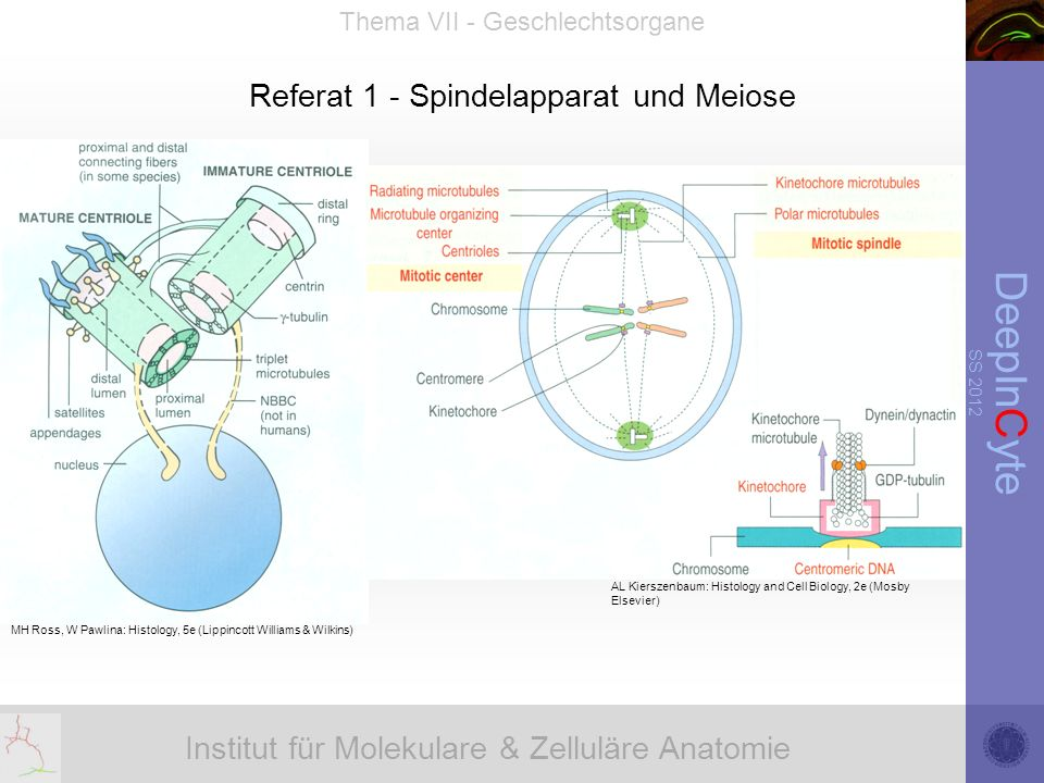 Institut für Molekulare & Zelluläre Anatomie DeepInCyte SS 2012 Thema VII - Geschlechtsorgane Referat 1 - Spindelapparat und Meiose AL Kierszenbaum: Histology and Cell Biology, 2e (Mosby Elsevier) MH Ross, W Pawlina: Histology, 5e (Lippincott Williams & Wilkins)