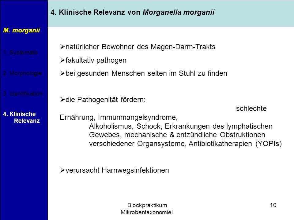 11.04.2007Blockpraktikum Mikrobentaxonomie I 10 M. morganii 1. Systematik 2. Morphologie 3. Identifikation 4. Klinische Relevanz 4. Klinische Relevanz
