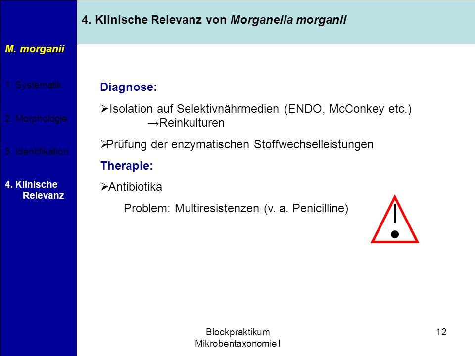 11.04.2007Blockpraktikum Mikrobentaxonomie I 12 M. morganii 1. Systematik 2. Morphologie 3. Identifikation 4. Klinische Relevanz 4. Klinische Relevanz