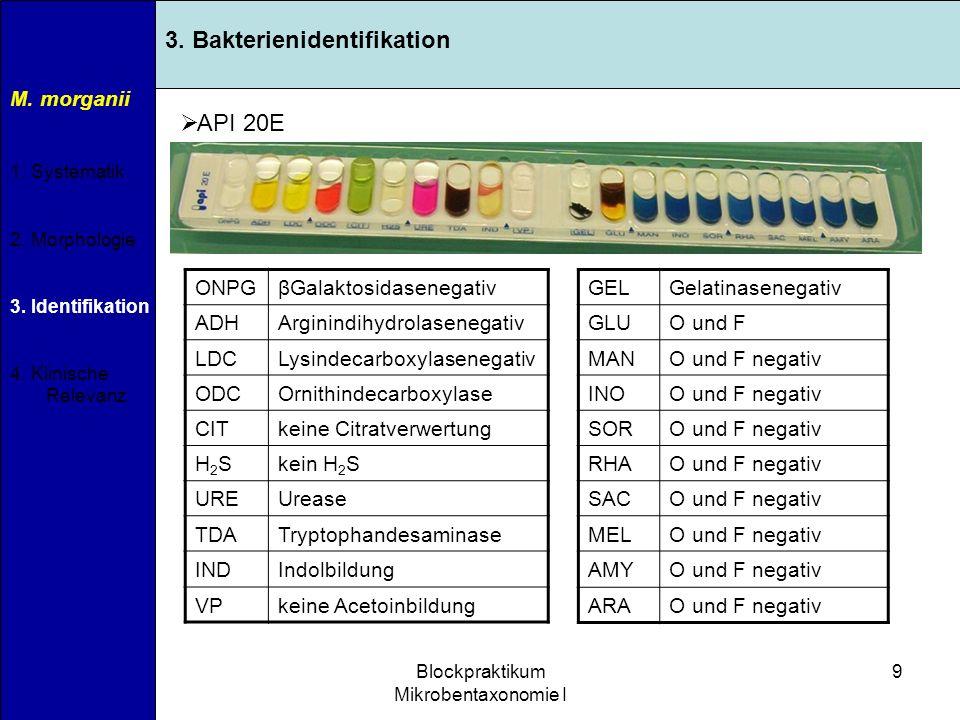 11.04.2007Blockpraktikum Mikrobentaxonomie I 10 M.