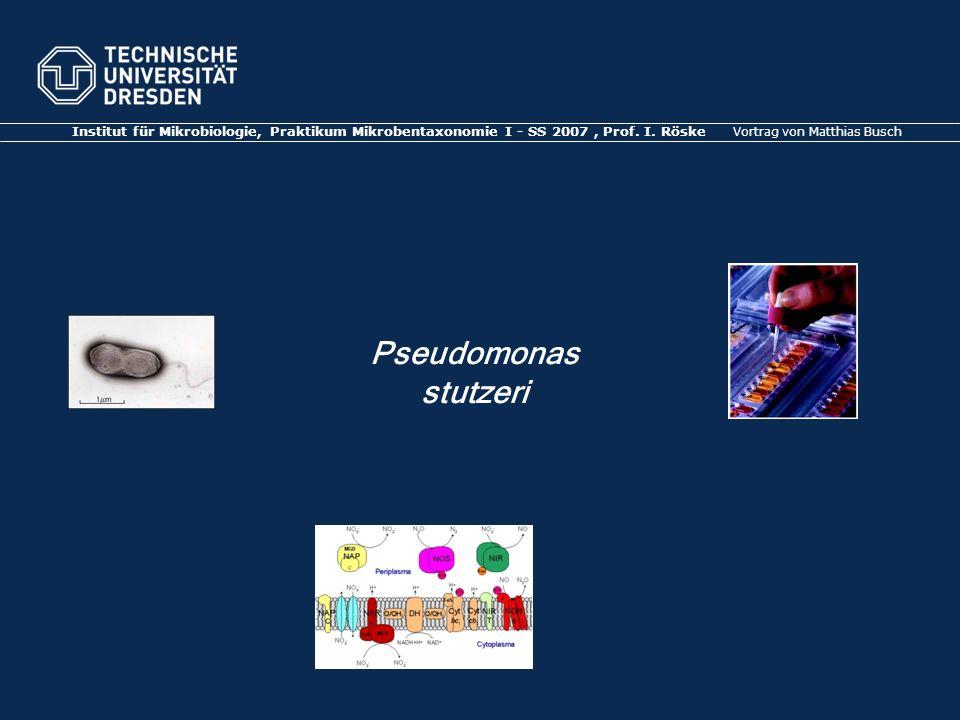 Institut für Mikrobiologie, Praktikum Mikrobentaxonomie I - SS 2007, Prof.