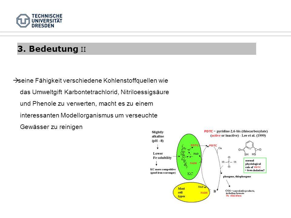 3. Bedeutung II seine Fähigkeit verschiedene Kohlenstoffquellen wie das Umweltgift Karbontetrachlorid, Nitriloessigsäure und Phenole zu verwerten, mac