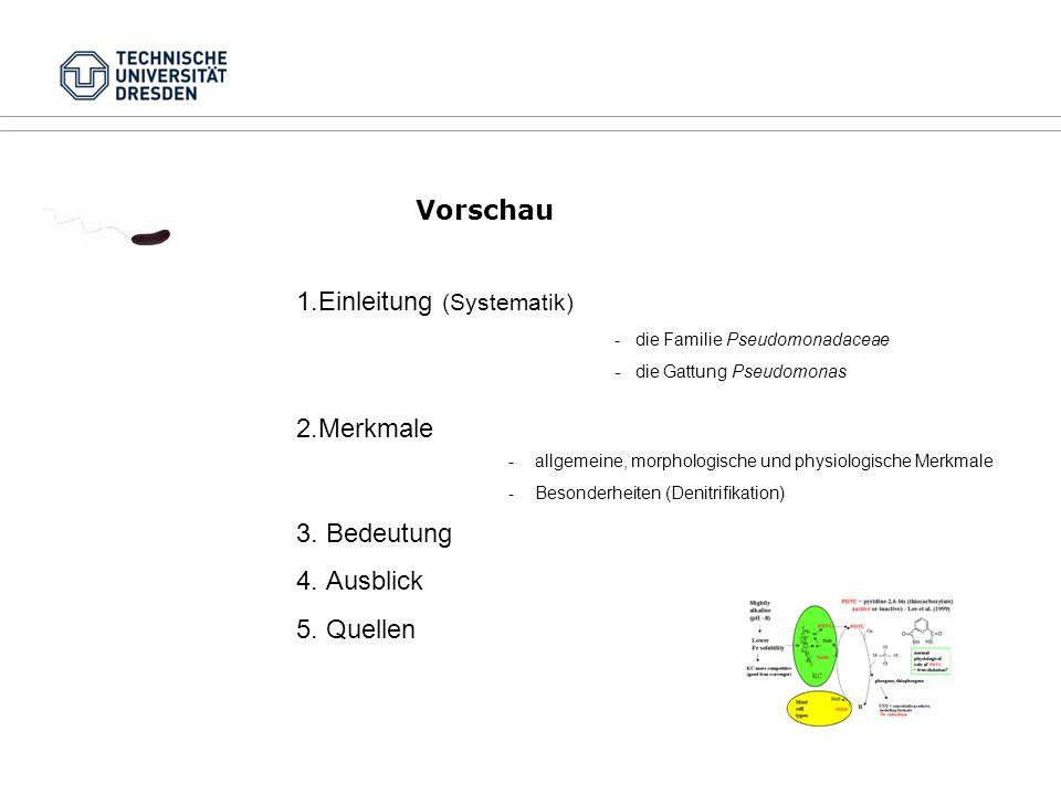 Vorschau 1.Einleitung (Systematik) - die Familie Pseudomonadaceae - die Gattung Pseudomonas 2.Merkmale -allgemeine, morphologische und physiologische Merkmale -Besonderheiten (Denitrifikation) 3.