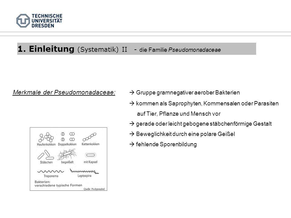 1. Einleitung (Systematik) II - die Familie Pseudomonadaceae Merkmale der Pseudomonadaceae: Gruppe gramnegativer aerober Bakterien kommen als Saprophy