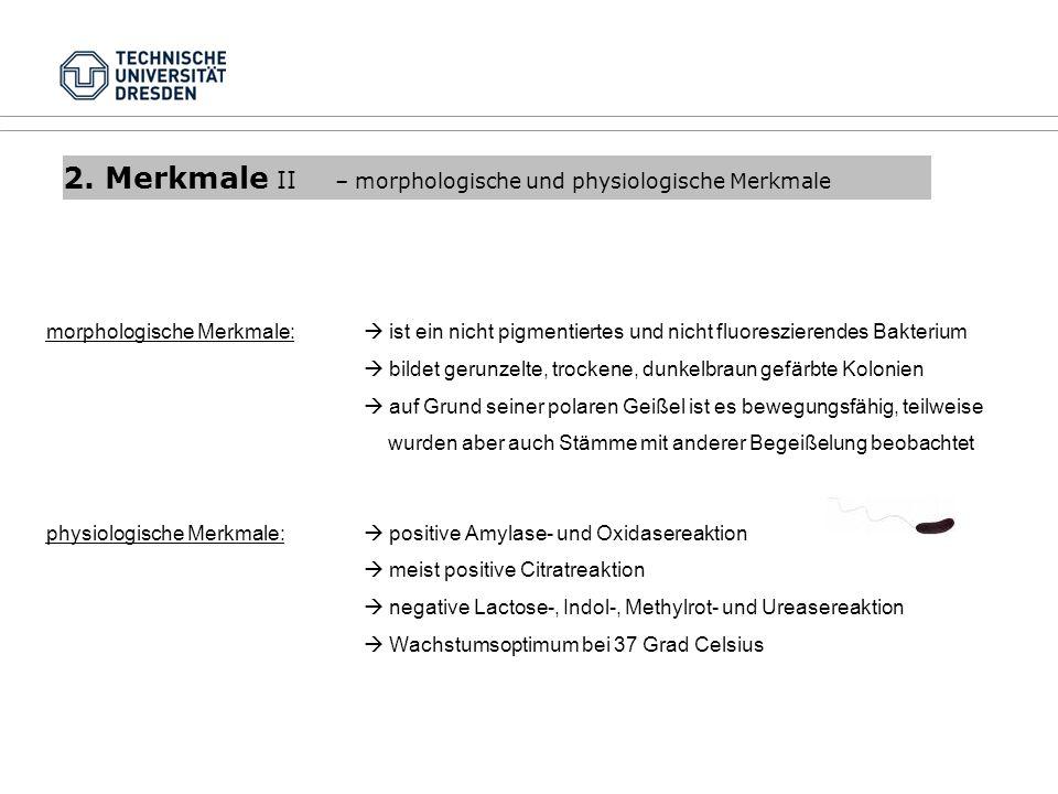2. Merkmale II – morphologische und physiologische Merkmale morphologische Merkmale: ist ein nicht pigmentiertes und nicht fluoreszierendes Bakterium