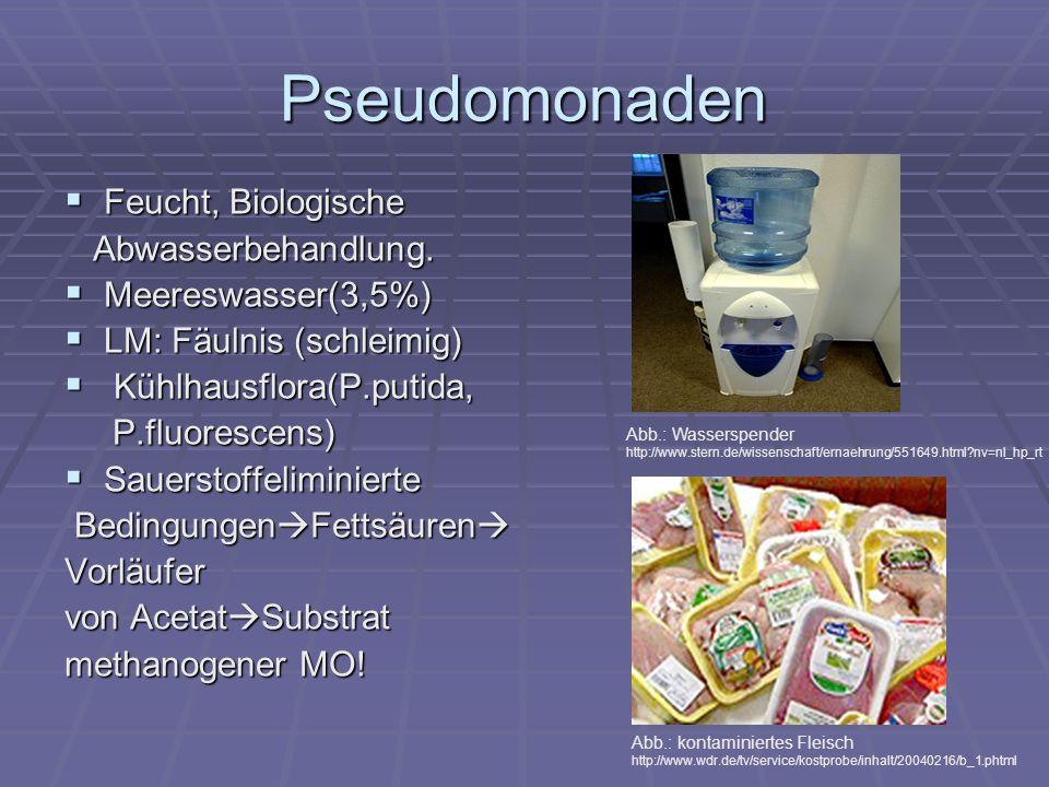 Pseudomonaden Malachitgrün- Pepton- Bouillon (20h bei 36°C) Trübung Verdacht auf P.aeruginesa Malachitgrün- Pepton- Bouillon (20h bei 36°C) Trübung Verdacht auf P.aeruginesa Cetrimid- Agar (20h bei36°C) Farbstofproduktion (blau- grun) spricht für P.