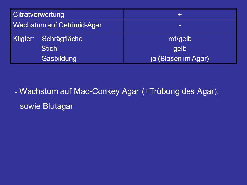 Citratverwertung+ Wachstum auf Cetrimid-Agar- Kligler: Schrägfläche Stich Gasbildung rot/gelb gelb ja (Blasen im Agar) - Wachstum auf Mac-Conkey Agar