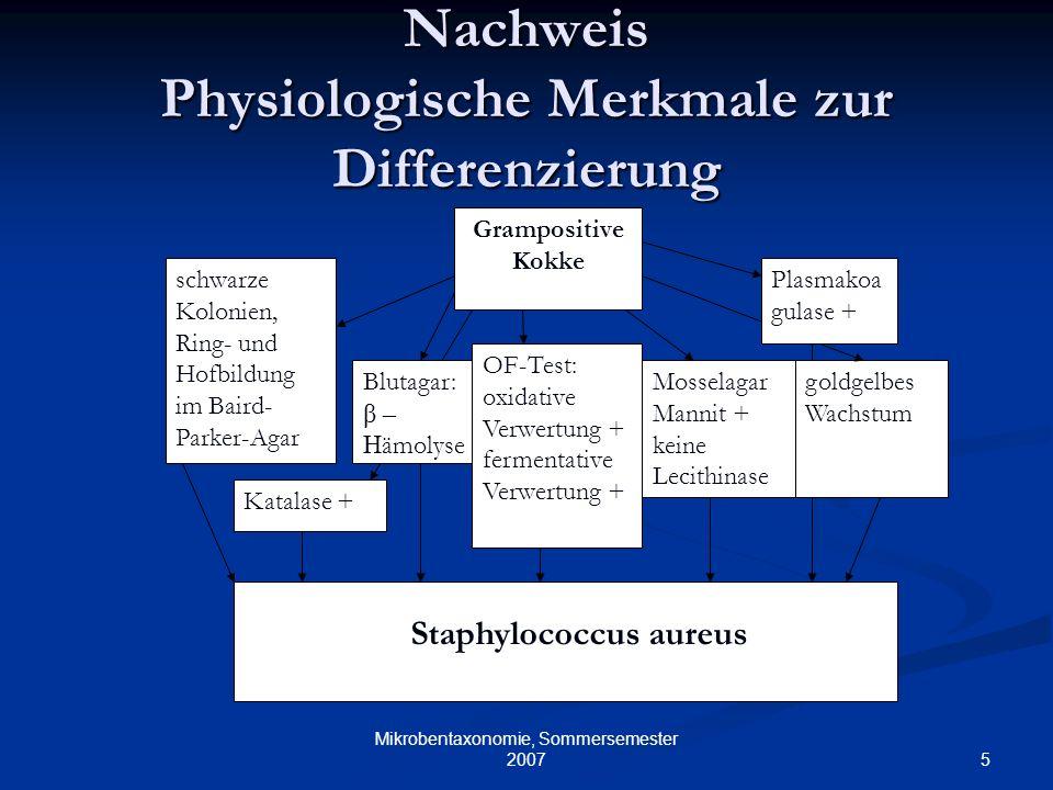 5 Mikrobentaxonomie, Sommersemester 2007 Nachweis Physiologische Merkmale zur Differenzierung Grampositive Kokke Katalase + Blutagar: β – H ämolyse OF