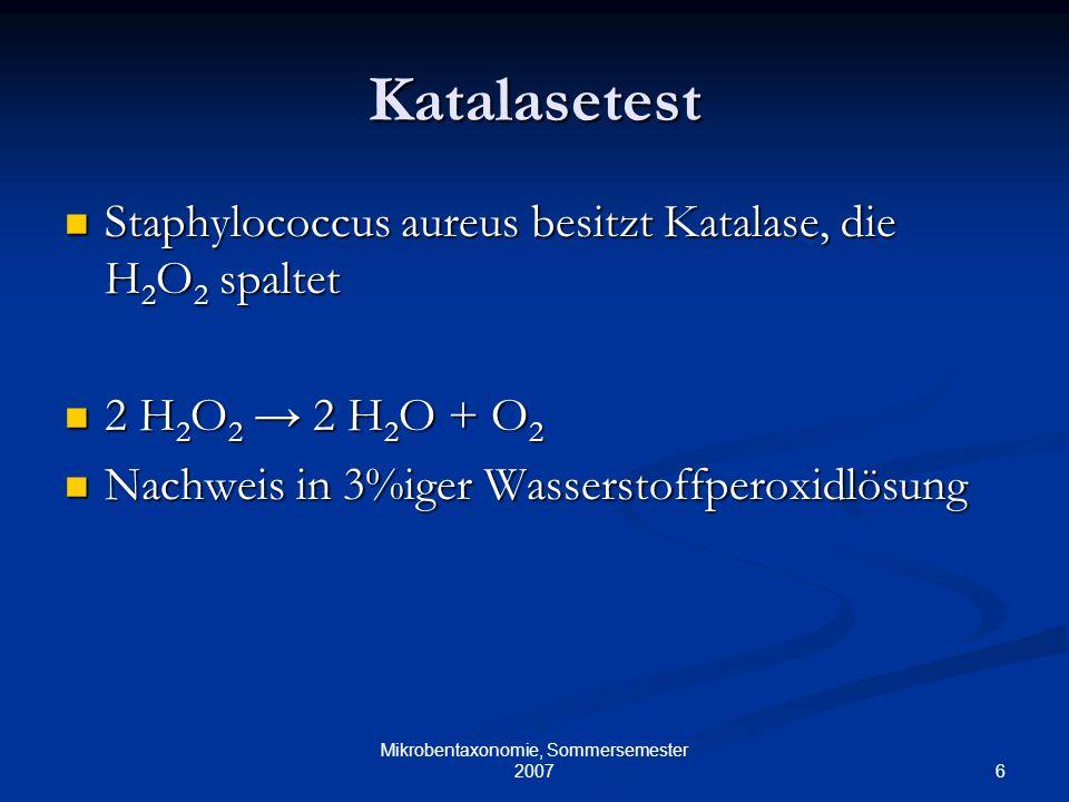 6 Mikrobentaxonomie, Sommersemester 2007 Katalasetest Staphylococcus aureus besitzt Katalase, die H 2 O 2 spaltet Staphylococcus aureus besitzt Katala