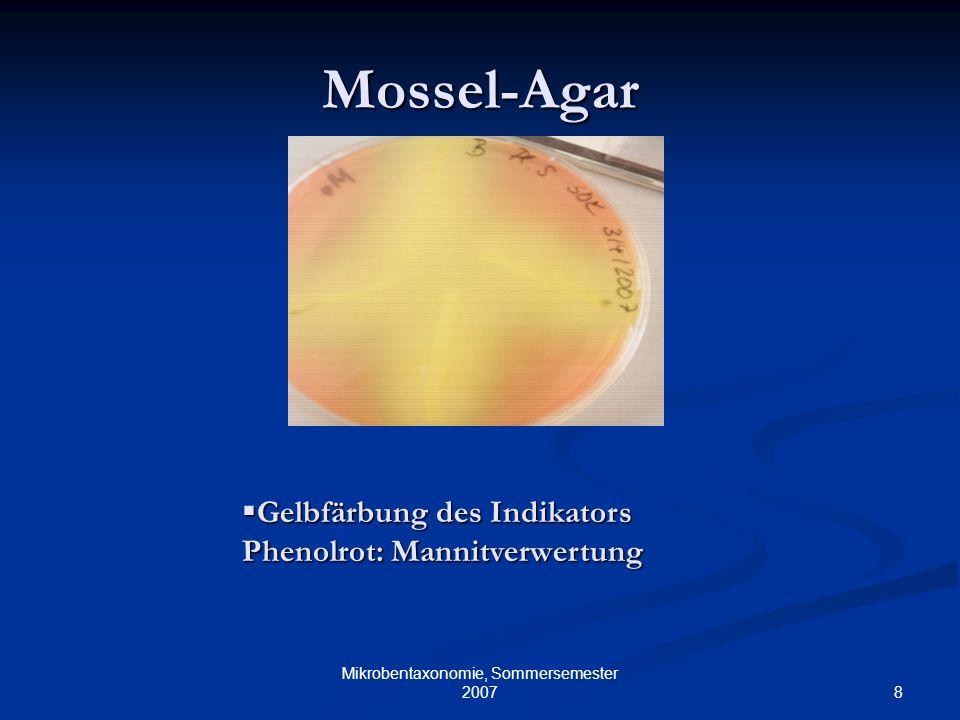 8 Mikrobentaxonomie, Sommersemester 2007 Mossel-Agar Gelbfärbung des Indikators Phenolrot: Mannitverwertung Gelbfärbung des Indikators Phenolrot: Mann