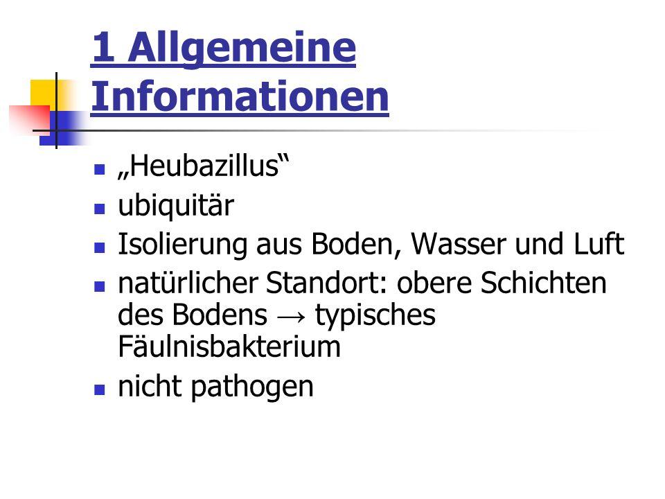1 Allgemeine Informationen Heubazillus ubiquitär Isolierung aus Boden, Wasser und Luft natürlicher Standort: obere Schichten des Bodens typisches Fäul