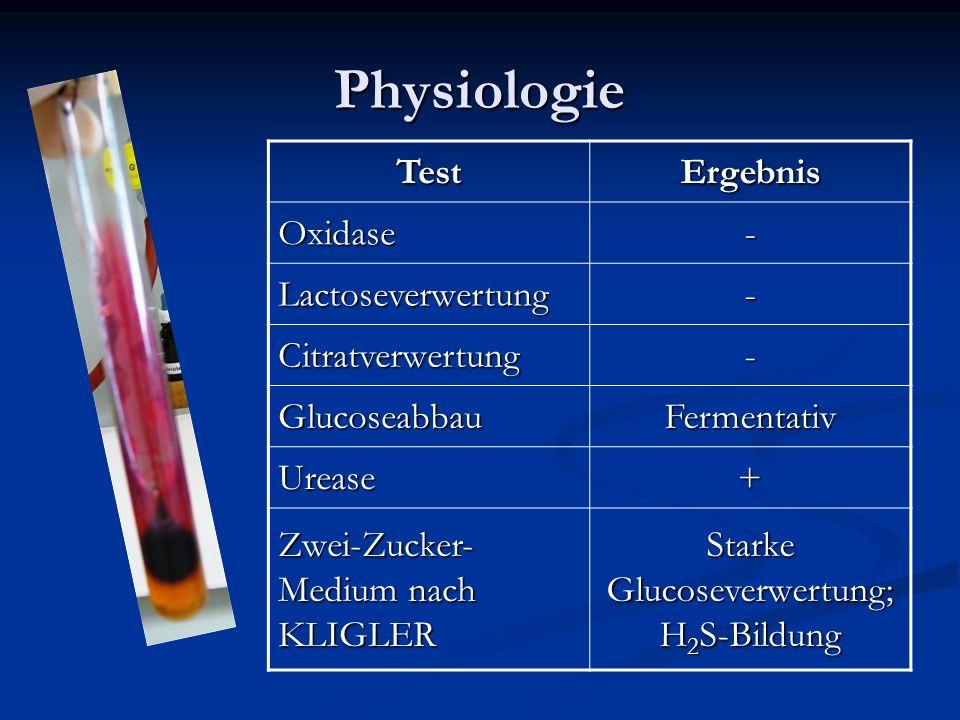 Physiologie TestErgebnis Oxidase- Lactoseverwertung- Citratverwertung- GlucoseabbauFermentativ Urease+ Zwei-Zucker- Medium nach KLIGLER Starke Glucose