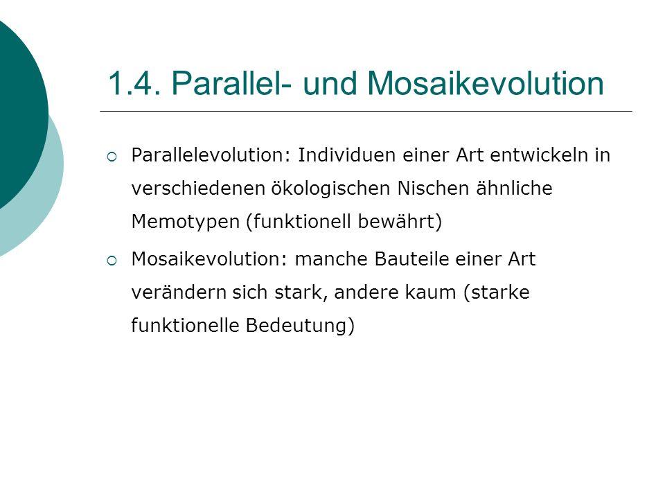 1.4. Parallel- und Mosaikevolution Parallelevolution: Individuen einer Art entwickeln in verschiedenen ökologischen Nischen ähnliche Memotypen (funkti