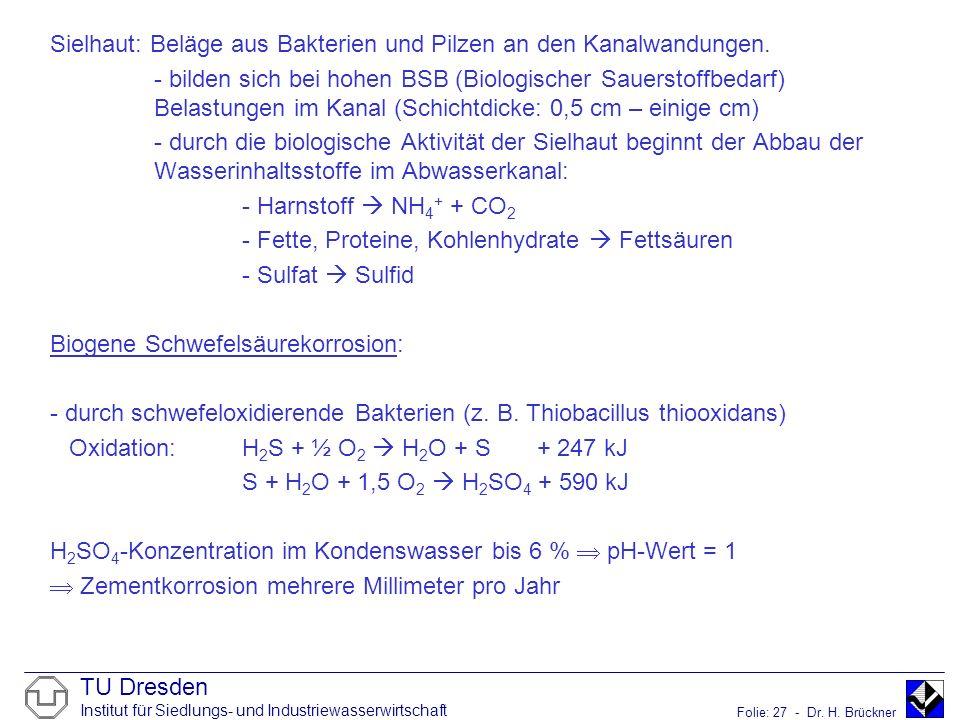 TU Dresden Institut für Siedlungs- und Industriewasserwirtschaft Folie: 27 - Dr. H. Brückner Sielhaut: Beläge aus Bakterien und Pilzen an den Kanalwan