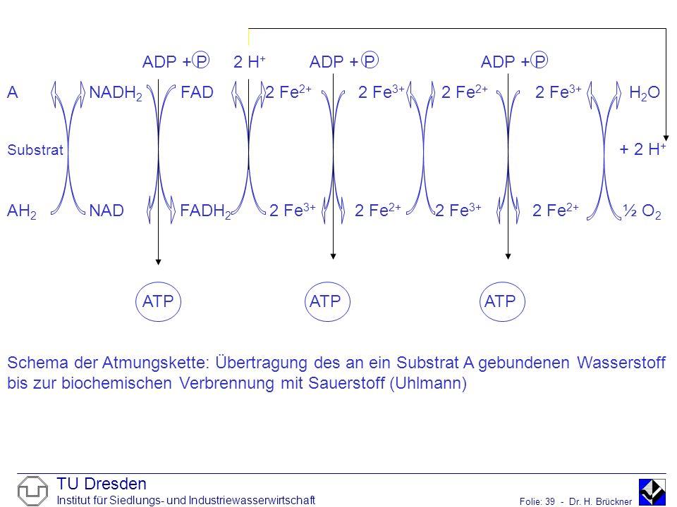 TU Dresden Institut für Siedlungs- und Industriewasserwirtschaft Folie: 39 - Dr. H. Brückner ADP + P 2 H + ADP + PADP + P A NADH 2 FAD 2 Fe 2+ 2 Fe 3+