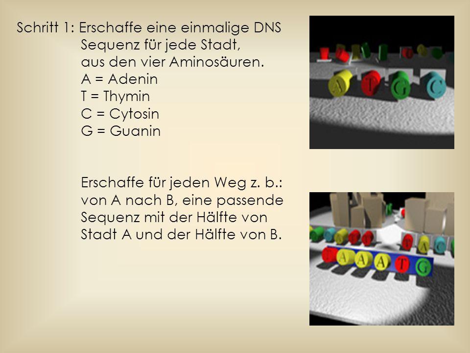 Schritt 1: Erschaffe eine einmalige DNS Sequenz für jede Stadt, aus den vier Aminosäuren. A = Adenin T = Thymin C = Cytosin G = Guanin Erschaffe für j
