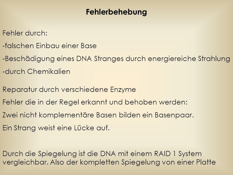 Fehlerbehebung Fehler durch: -falschen Einbau einer Base -Beschädigung eines DNA Stranges durch energiereiche Strahlung -durch Chemikalien Reparatur d