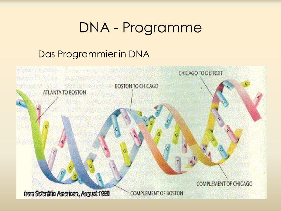 Ungeachtet ihrer respektablen Komplexität, haben biologische und mathematische Operationen gleiche Eigenschaften: Die sehr komplizierte Struktur einer lebenden Kreatur ist das Ergebnis angewendeten simplen Operationen von startenden Informationen kodiert in a DNA Sequenz.